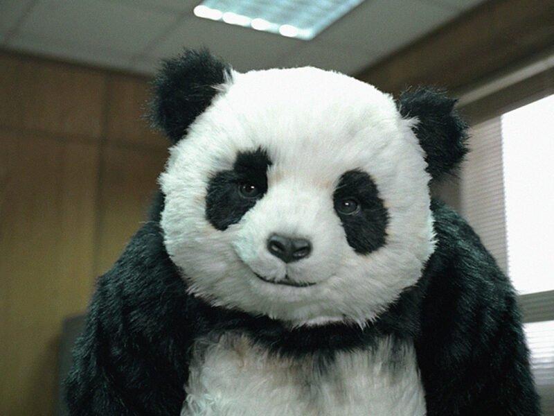 panda cheese never say no to panda